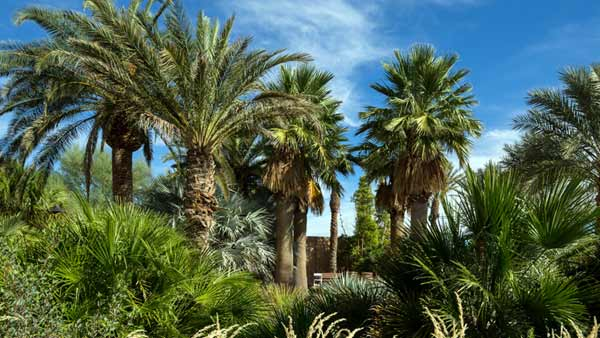 Botanic gardens dating