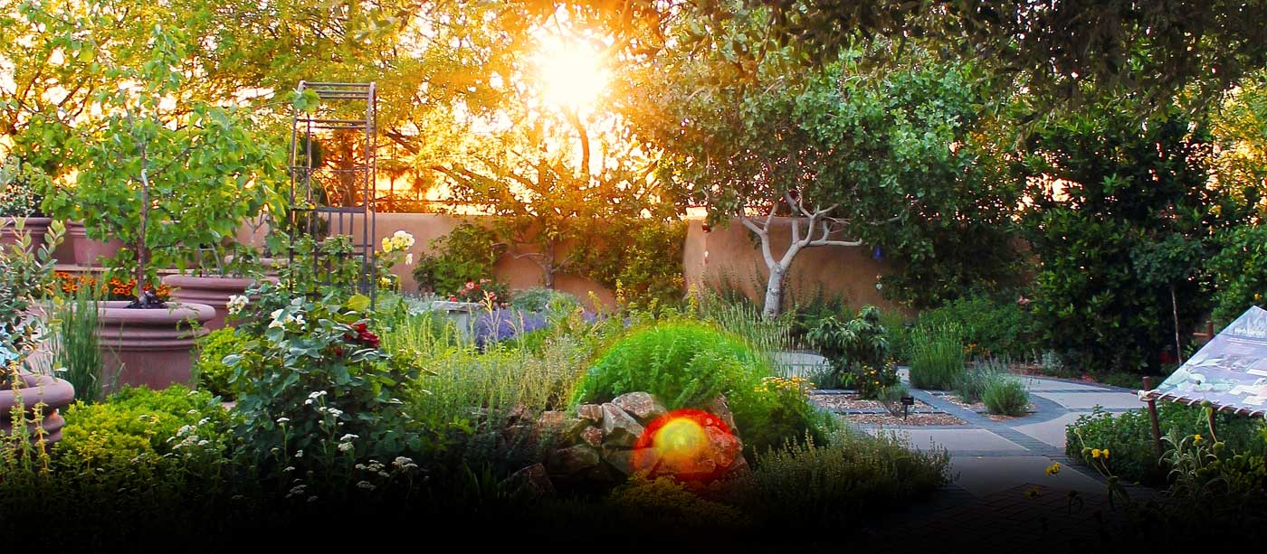 Herb garden during twilight at the Las Vegas Springs Preserve
