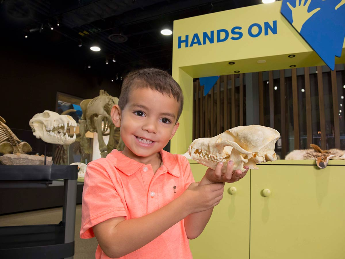 Boy playing with fossils