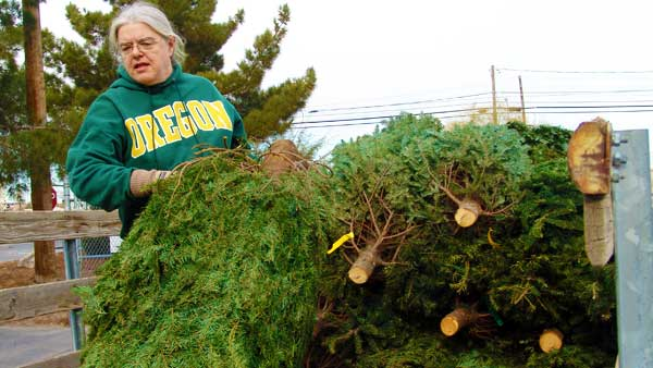 Woman unloading trees at a Las Vegas Christmas Tree Recycling drop-off site